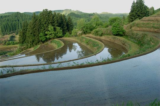 水を張った水田