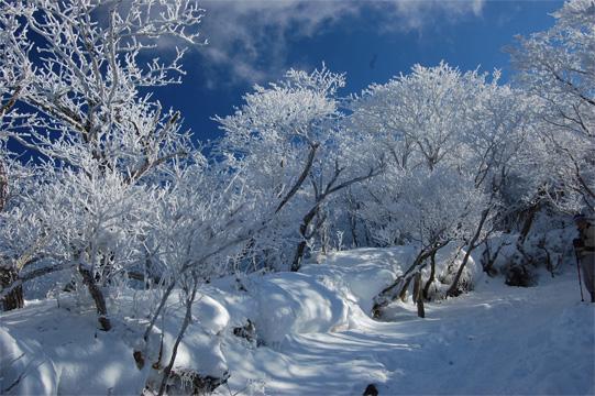 2合目付近の樹氷