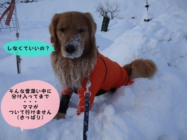 003_20111231165448.jpg