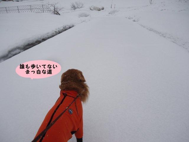 004_20120226201343.jpg