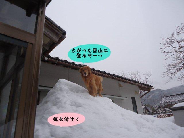 005_20120229205711.jpg