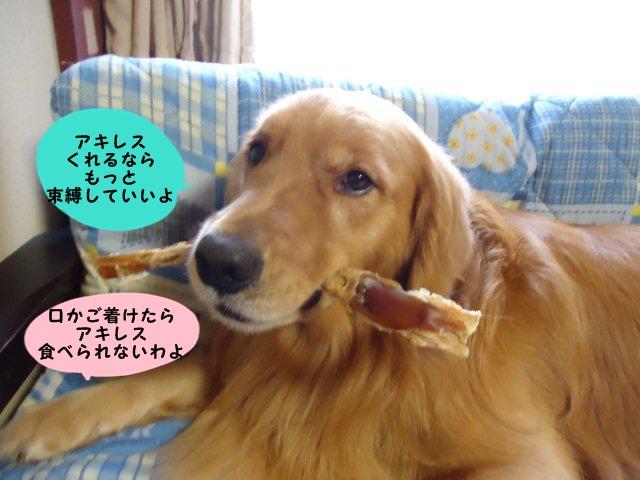 006_20110930162730.jpg