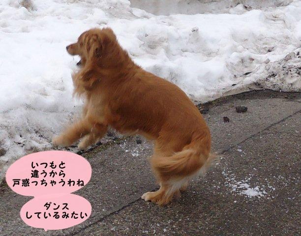 006_20120302123521.jpg