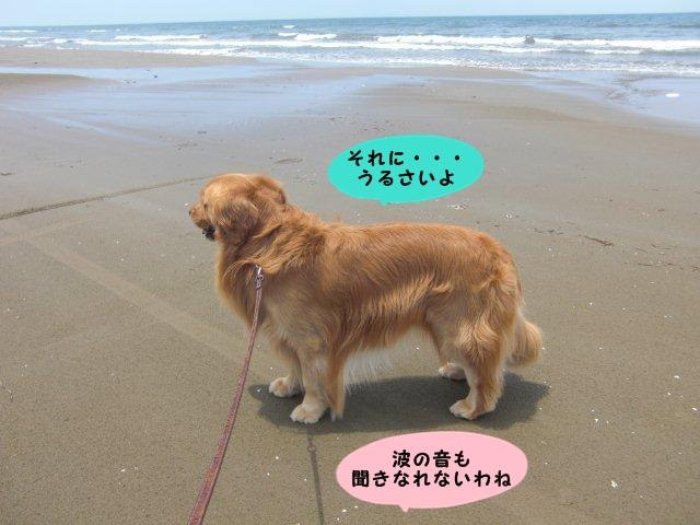 008_20110630160342.jpg