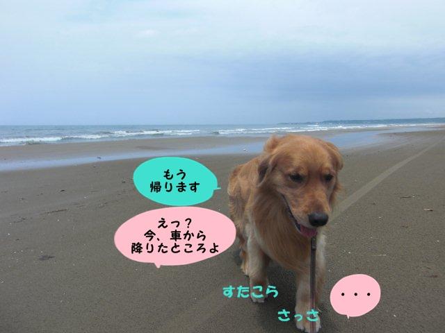 009_20110630160353.jpg