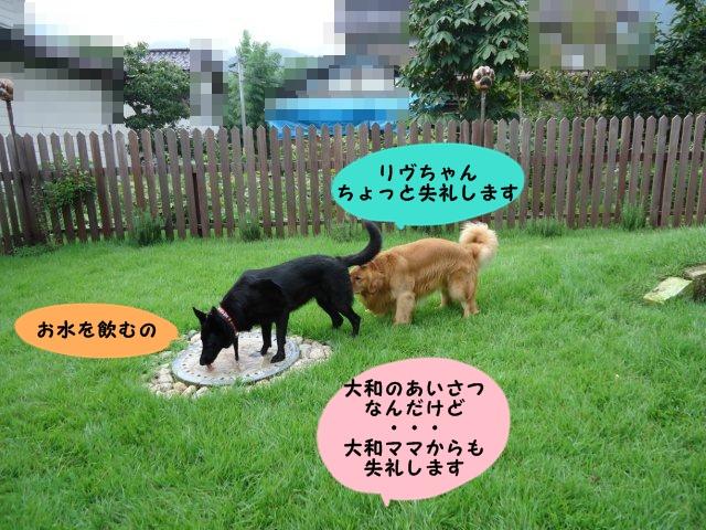 009_20110831215320.jpg