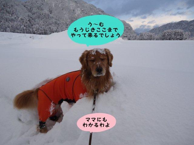 009_20120131152432.jpg