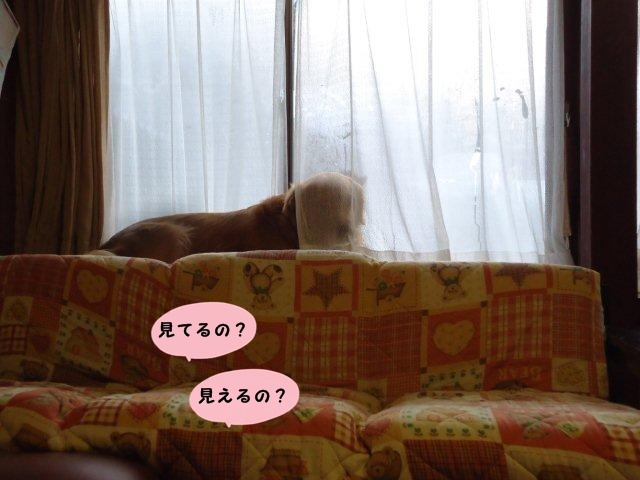 009_20120227183355.jpg