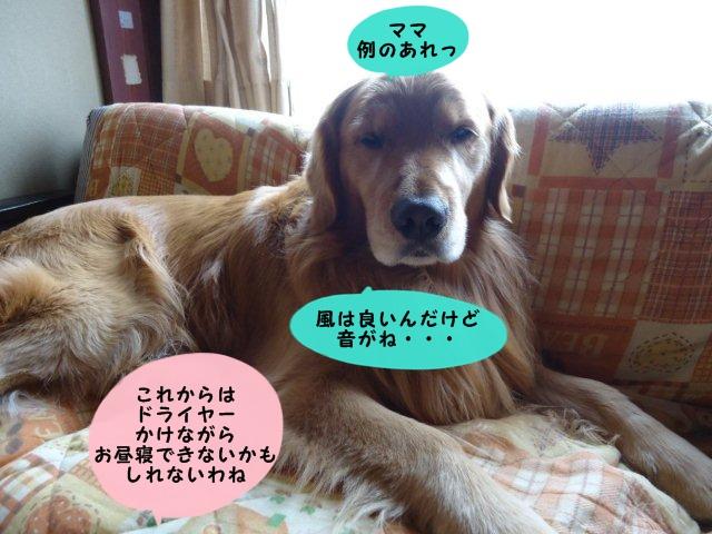 009_20120309134457.jpg