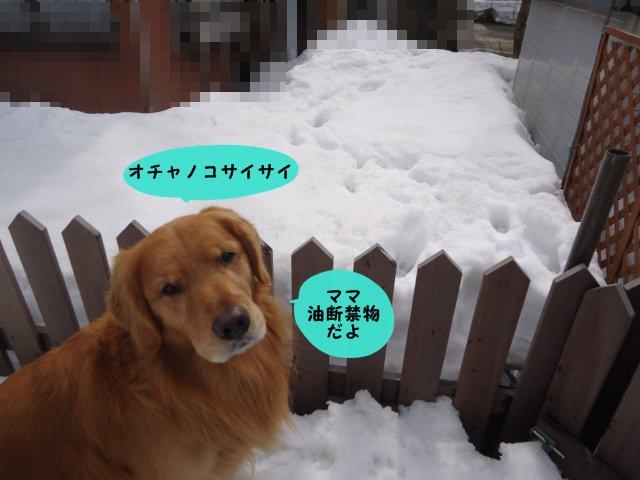 009_20120310110320.jpg
