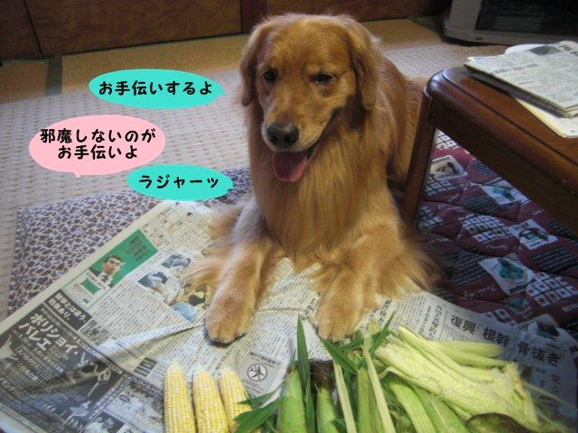 010_20110730195223.jpg