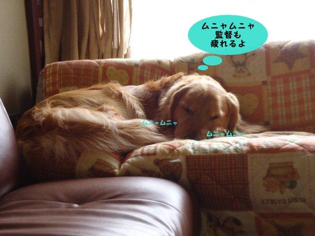 010_20120218103715.jpg
