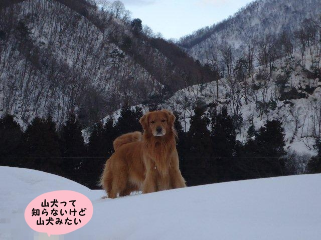 010_20120220195910.jpg
