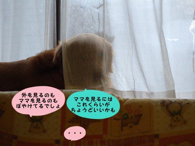 010_20120227183404.jpg