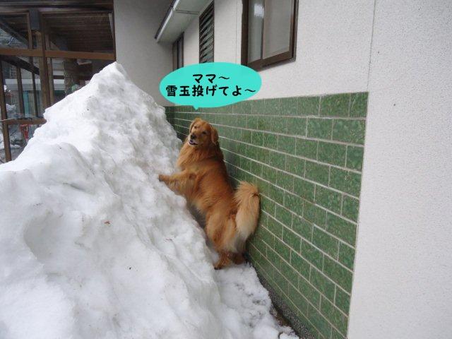 010_20120310110328.jpg