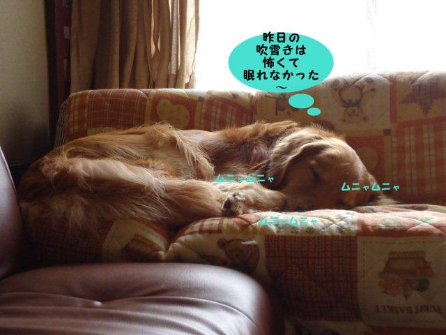 011_20120218103723.jpg
