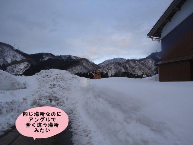 011_20120220195925.jpg