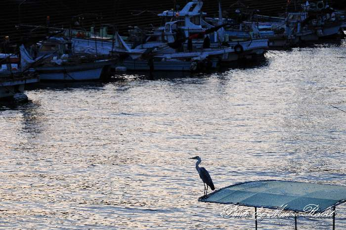 西条漁港 愛媛県 西条市 北浜・新堀下