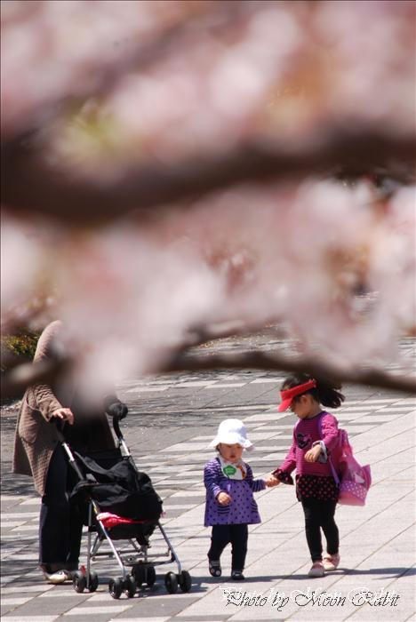 [東温市の桜] 東温市総合公園(旧重信町総合公園)と桜・お花見 愛媛県東温市西岡1284-1 2010年4月8日