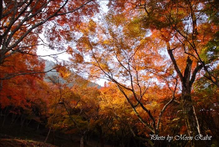 大洲市の紅葉 紅葉山・稲荷山公園・稲荷神社のモミジ狩り 愛媛県大洲市新谷 2010年11月25日