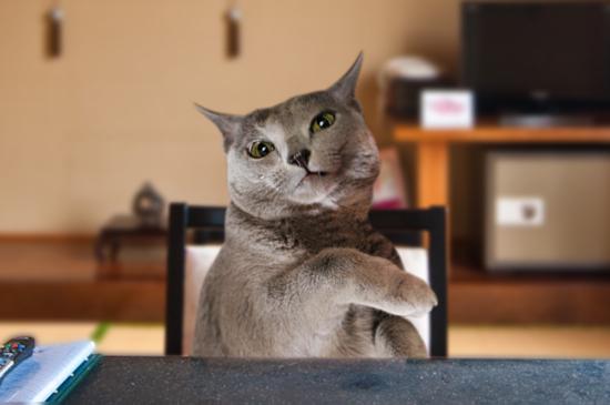 偽装猫10