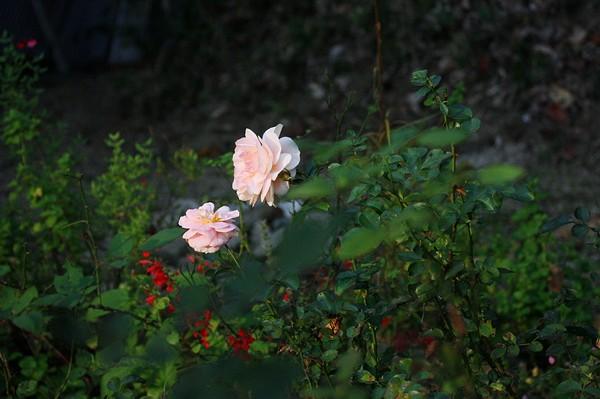 20111106005.jpg