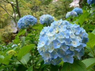 鎌倉_長谷寺2