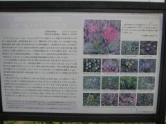 sakurakouen130317-101.jpg