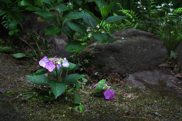 20110618-017tomo.jpg