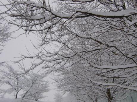 雪の華は満開