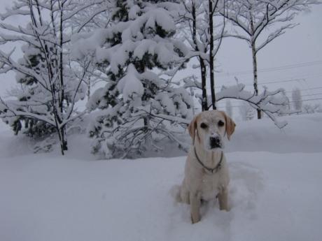 まだまだ冬真っ盛りだよ!