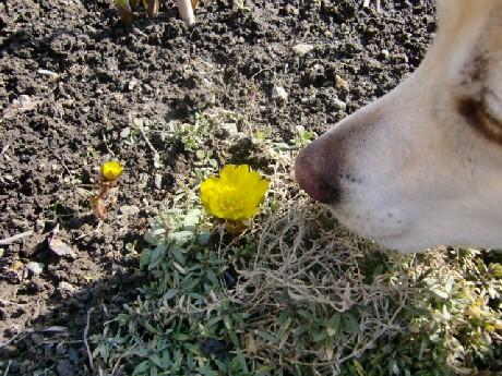 キンポウゲ科の多年草