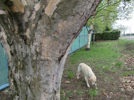 名前も知らない、木ですから♪