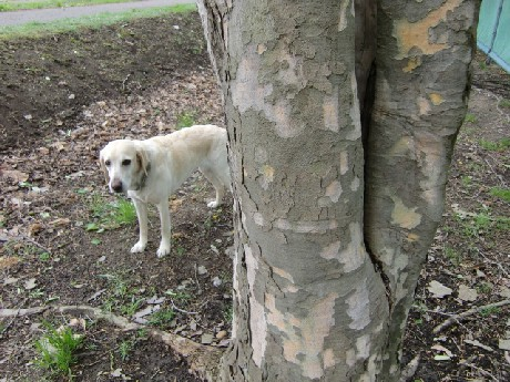 見たこともない、木ですから♪