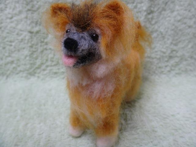 犬毛 ベリー