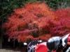 紅葉バイク