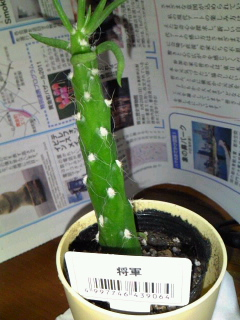 201108goku