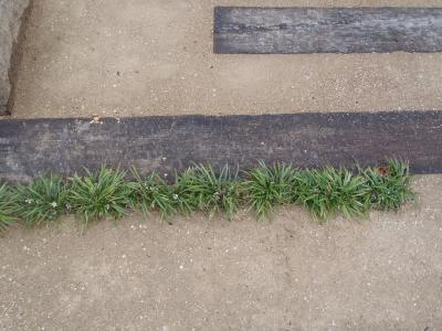 駐車場の土舗装 アップ