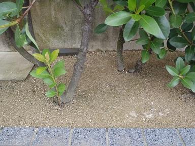 植樹帯アップ