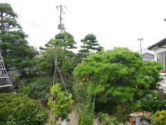 IMGP0328.jpg