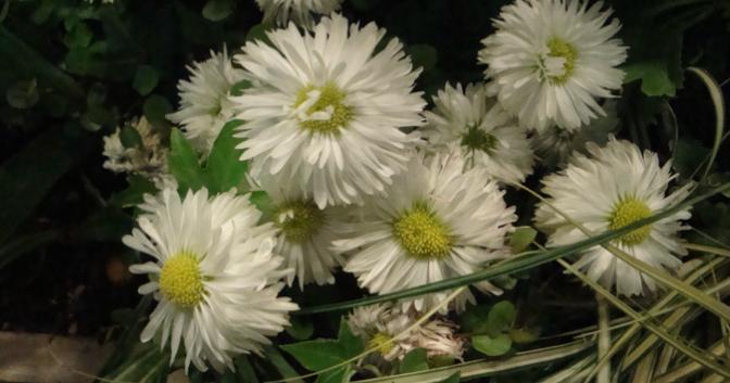 花の祈り 5