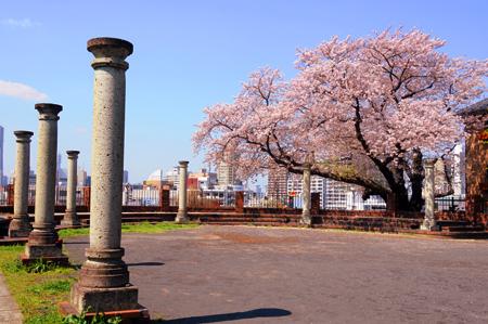 120313桜