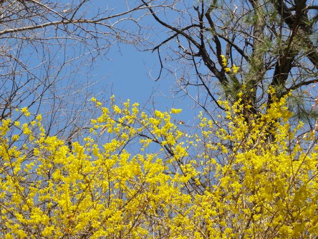 2013年4月7日 ケナリと青空