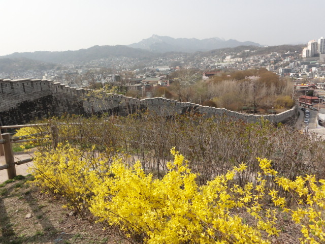 2013年4月17日 ソウル城郭 ケナリの花
