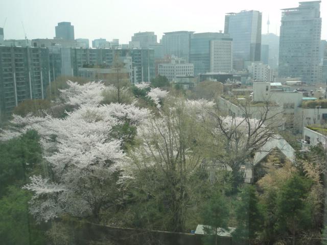 2013年4月18日 省谷美術館の桜