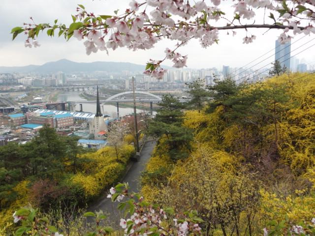 2013年4月20日 鷹峰山 桜とケナリ