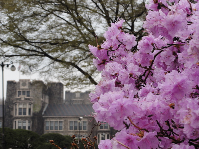 2013年4月20日 延世大キャンパス1