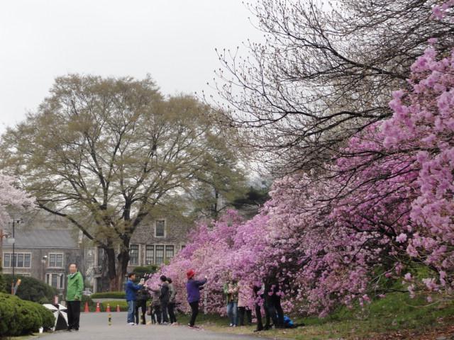 2013年4月20日 延世大キャンパス3