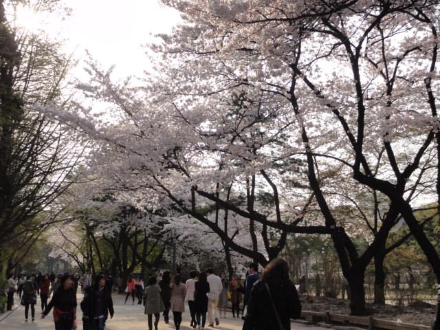 2013年4月21日 徳寿宮2