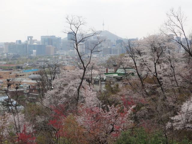 2013年4月26日 西村の桜